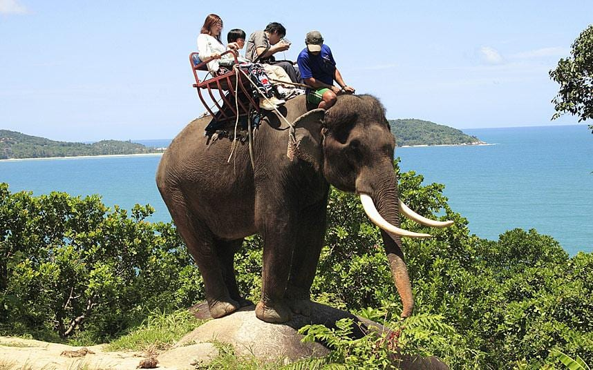 How do I get down from an elephant?
